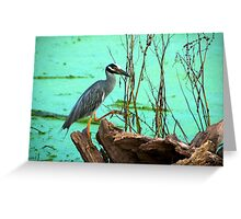 Stepping right up - Brazos Bend State Park Greeting Card