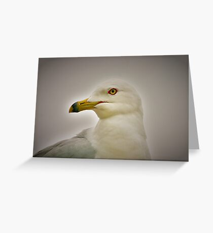 Seagull in Profile Greeting Card