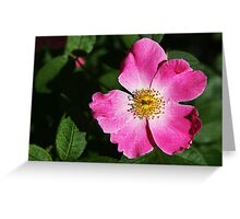 Wild Rose Greeting Card