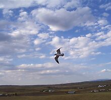 Precious leans to fly by barbarajm