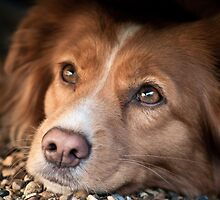 The Posing Toller by Leanne Graham