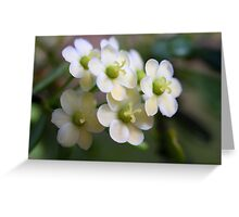Phyllanthus microcladus Greeting Card