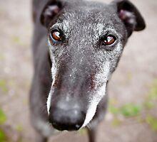 Greyhound Hypnotizer by Leanne Graham