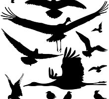 Birds silhouettes by Laschon Robert Paul