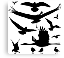 Birds silhouettes Canvas Print