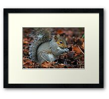 Time To Eat - Squirrel  Framed Print