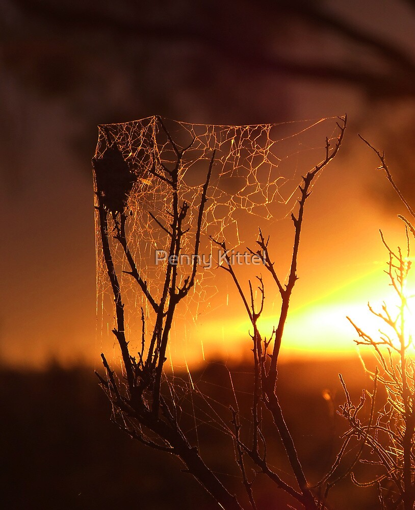 Saltbush Spiders... by kurrawinya