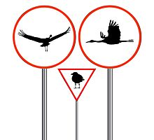 Birds traffic signs Photographic Print