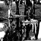 Reflections upon Trees by bazcelt