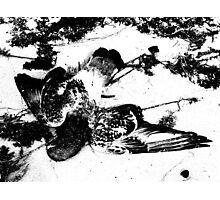 Dead in Snow (b&w) Photographic Print