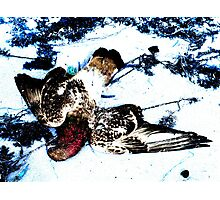 Dead in Snow  Photographic Print