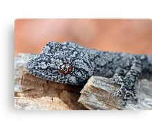 Southern Spiny-tailed Gecko Canvas Print