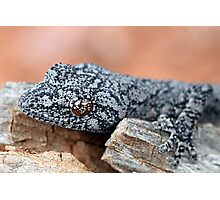 Southern Spiny-tailed Gecko Photographic Print