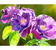 Purple Roses a digital watercolour by Joan A Hamilton Photographic Print