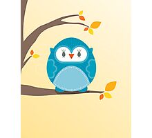 Sweet owl in a tree 2 Photographic Print