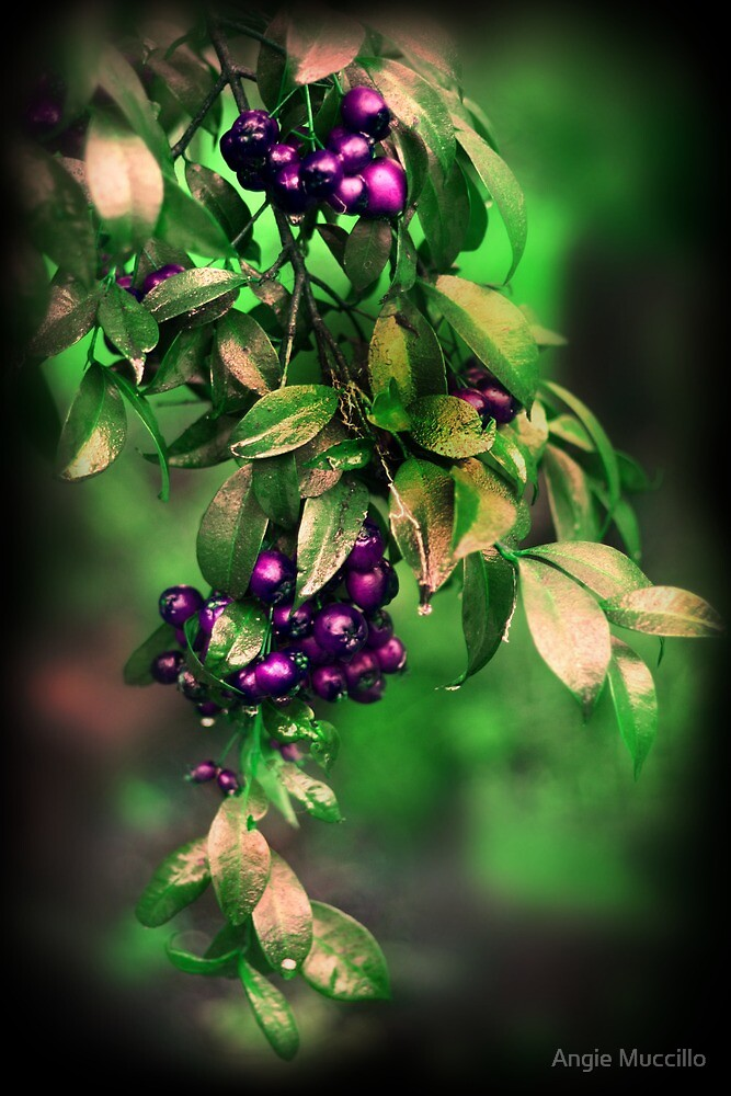 Berry Tree by Angie Muccillo