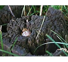 An Acorn Grows Photographic Print