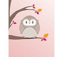 Sweet owl in a tree 5 Photographic Print