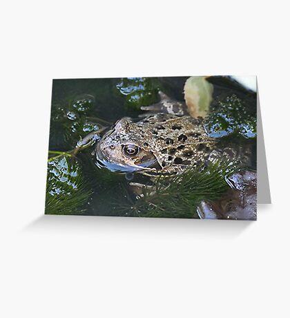 Backyard Habitat Greeting Card