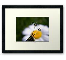 Daisy Refraction In Dandelion Seeds Framed Print