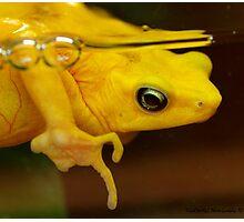 Amphibious Frog-ious Photographic Print