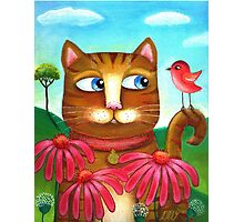 Cat in the Echinacea  Photographic Print
