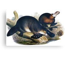 The platypus (Ornithorhynchus anatinus) painting Canvas Print