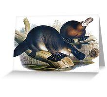 The platypus (Ornithorhynchus anatinus) painting Greeting Card
