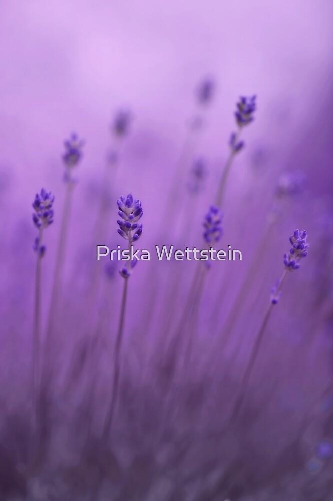 lavender colors by Priska Wettstein
