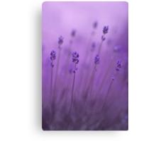 lavender colors Canvas Print