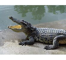 Crocodile farm in Thailand 7 Photographic Print