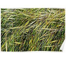 A Little California Grass Poster