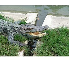 Crocodile farm in Thailand 14 Photographic Print