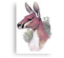 Red kangaroo portrait Canvas Print