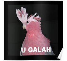U Galah Poster