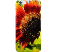 Beautiful unique red and orange sunflower from my urban ️garden  iPhone Case/Skin