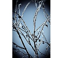 Frozen Limbs Photographic Print