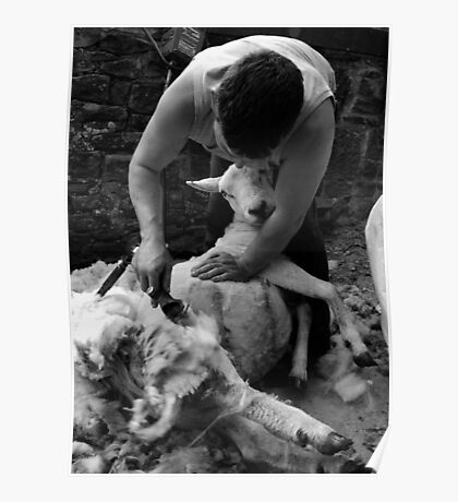 Shearing in Black and White Poster