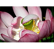 Lotus Vail Photographic Print