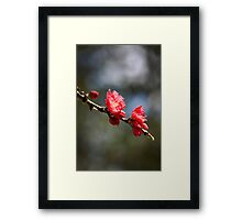 Downward Blossoms Framed Print