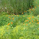 Field of Color by Karen K Smith