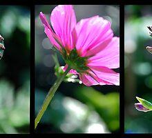 Botanical Triptich by chimane