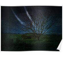Tree@Night Poster