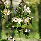 Apple Tree by smilyjay