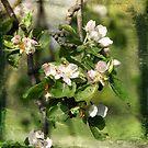 Apple Tree by smilyjay