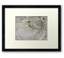 Squiggles, skitters and crab holes Framed Print