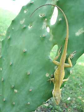 Anole on Cactus by May Lattanzio