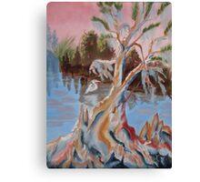 Eureka Cypress Canvas Print