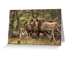 Bighorn Rams - The Kootenay's Greeting Card