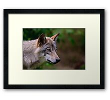 Timber Wolf Framed Print